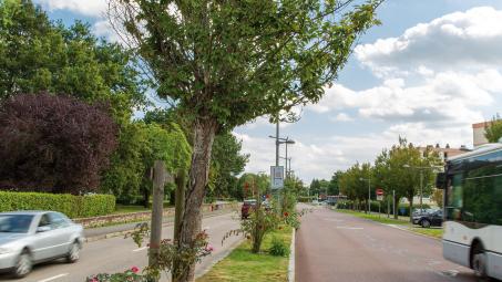 Avenue du Mont-aux-Malades : travaux de requalification paysagère