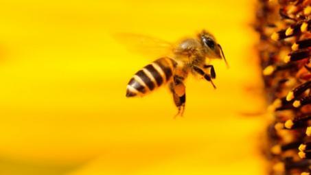 Les abeilles sont de retour !